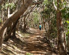 Naiset vaellus läpi metsään Kauai Kuvituskuvat