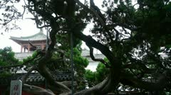Stout rough cypress tree trunks & Chinese ancient building,breeze blowing leave Stock Footage