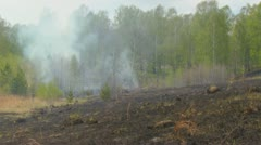 fire in forest - stock footage