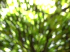 green tree bokeh in sunlight summer background - stock photo