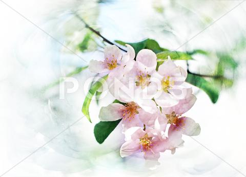 Stock Illustration of spring trees blossom watercolor illustration