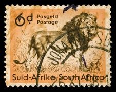 african lion stamp - stock photo