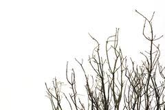 autumn trees - stock photo