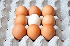White and brown egg Stock Photos