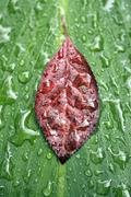 Leaf raindrops Stock Photos