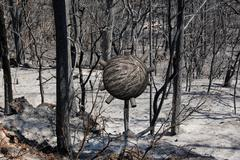 Sphere in burned forest Stock Illustration