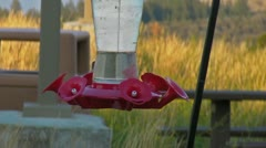 Hummingbirds Stock Footage