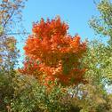 Trees in autumn Stock Photos