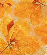 orange background with autumn leaves - stock photo