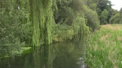 Calm River Scene with Willow Tree Stock Footage