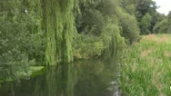 Stock Video Footage of Calm River Scene with Willow Tree