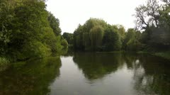 Gentle River & Willow Tree Stock Footage