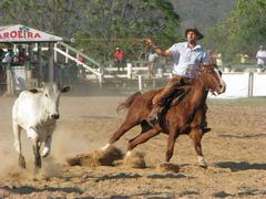 Clube do Laco Championship - Lasso competition Stock Photos