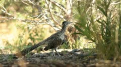 RoadRunner Stretching - stock footage
