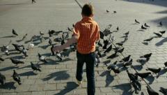 Little boy chasing pigeons Stock Footage