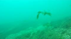 Walleye Stock Footage