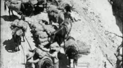 Miners PACK DONKEYS Transport Gold Mine Ore 1930s Vintage Film Home Movie 3658 - stock footage