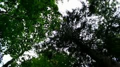 Lost in the forest, feeling sick Stock Footage