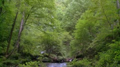 Mountain Stream - HD 720 Stock Footage