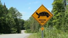 Turtle crossing. Stock Footage