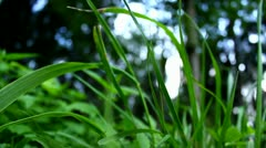 Grass close-up, cold morning - stock footage