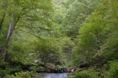 Mountain Stream - NTSC - stock footage