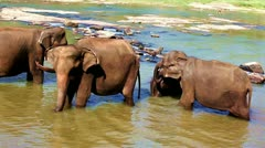Asian elephants Stock Footage