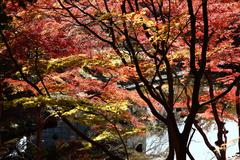 Autumn Leaves in Japan Stock Photos