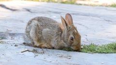 Cute bunny - stock footage