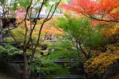 Autumn Laeves in Japan - stock photo