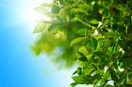 Stock Photo of green leaves and sun