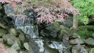 Waterfall with Laced Leaf Maple Trees and Ferns in Zen Garden Stock Footage