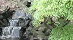 Waterfall with Maple Trees and Ferns in Garden Stock Footage