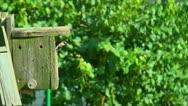 Bird or house sparrow in bird house Stock Footage