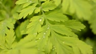 Water droplets in the forest Stock Footage