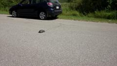 Car Pulls Over to Avoid Killing an Endangered Blanding's Turtle. - stock footage