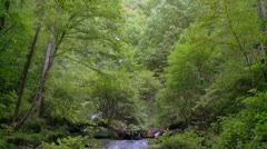 Mountain Stream - HD 1080 Stock Footage