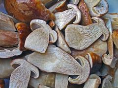 fresh edible boletus heap, environment details - stock photo
