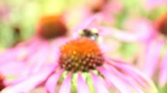 Bee on plant Stock Footage