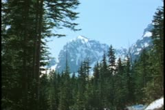 Wide shot of snow and pine trees, alpine scene, Mount Rainer National Park Stock Footage