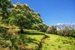 tree on the hillside - stock photo