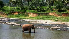 Asian elephant Stock Footage