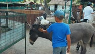 Child, donkey and the boy, zoo Stock Footage