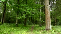 Path in the forest - stock footage