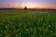 sunset in summer field - stock photo