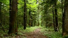 Old natural forest, turning around - stock footage