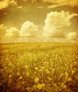 Summer field under sky in grunge Stock Photos