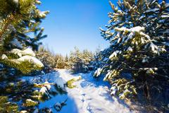 winter field under - stock photo
