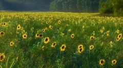 summer field with flowers - stock photo