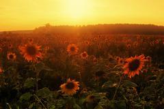 Sunset in summer field Stock Photos